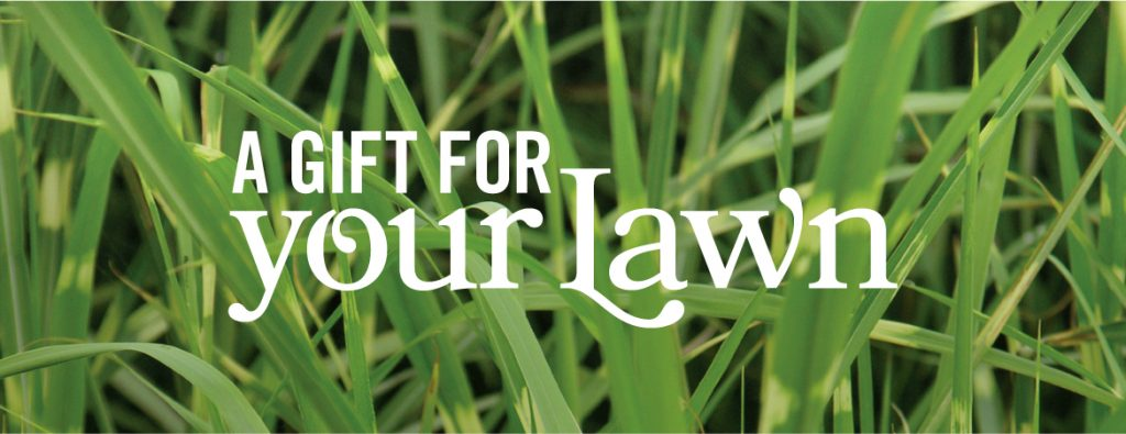 What to Ask Your Lawn Care Company in Rogers